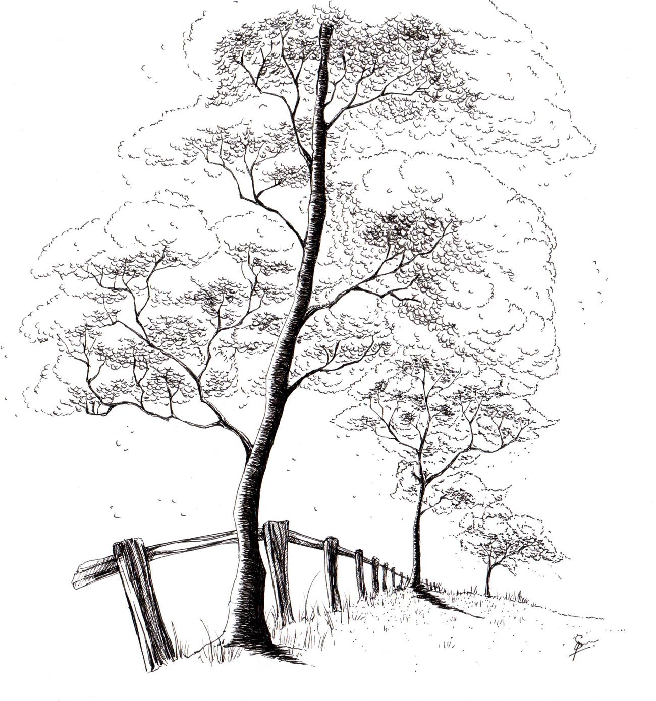 Download Kumpulan Gambar Sketsa Pohon Rindang