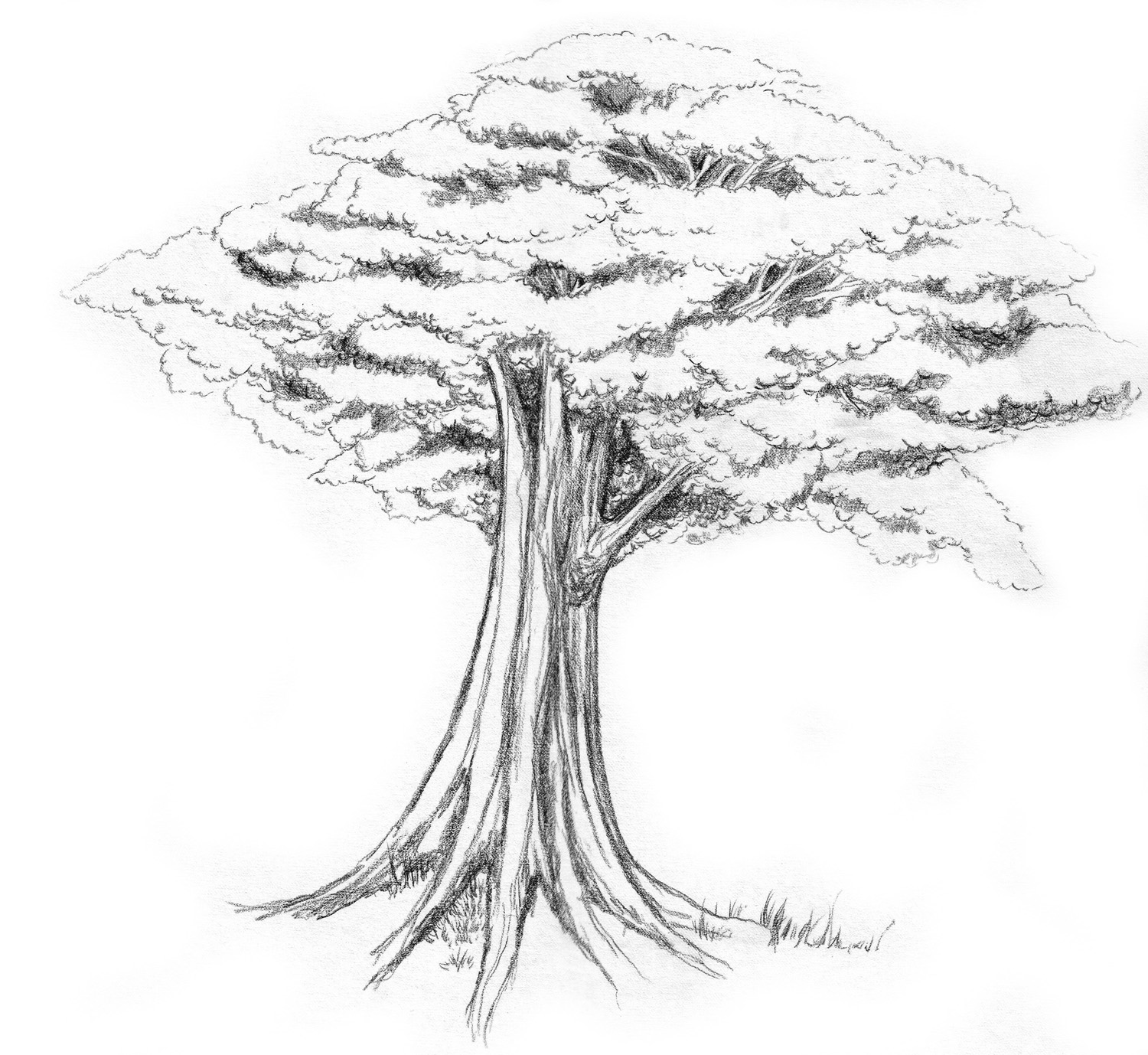 Tree Sketch With Colour D