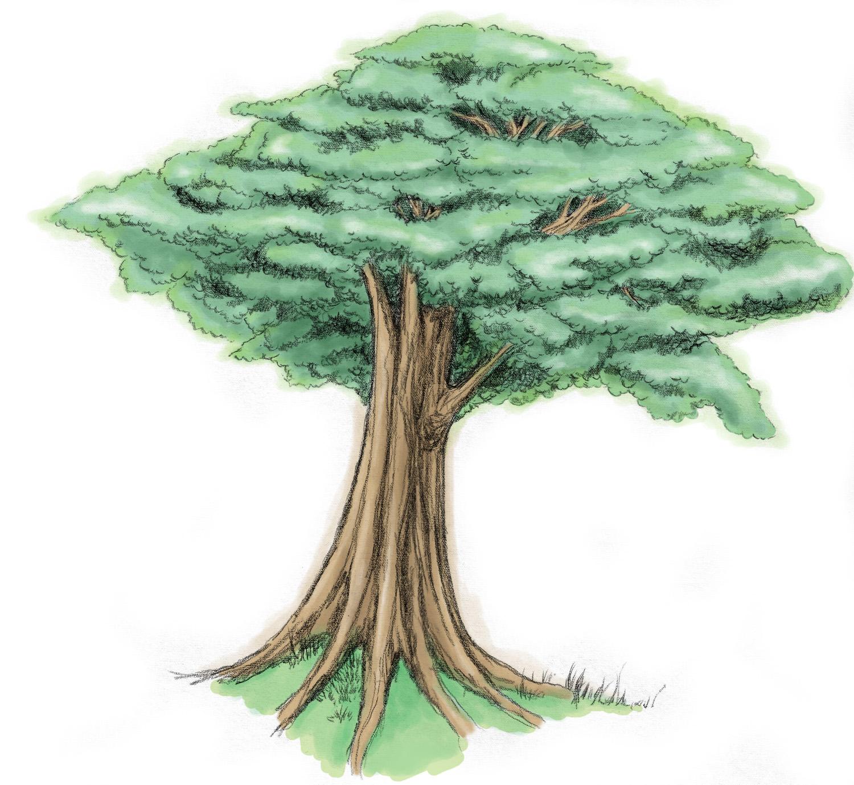 Sebuah pohon yang rindang ^^