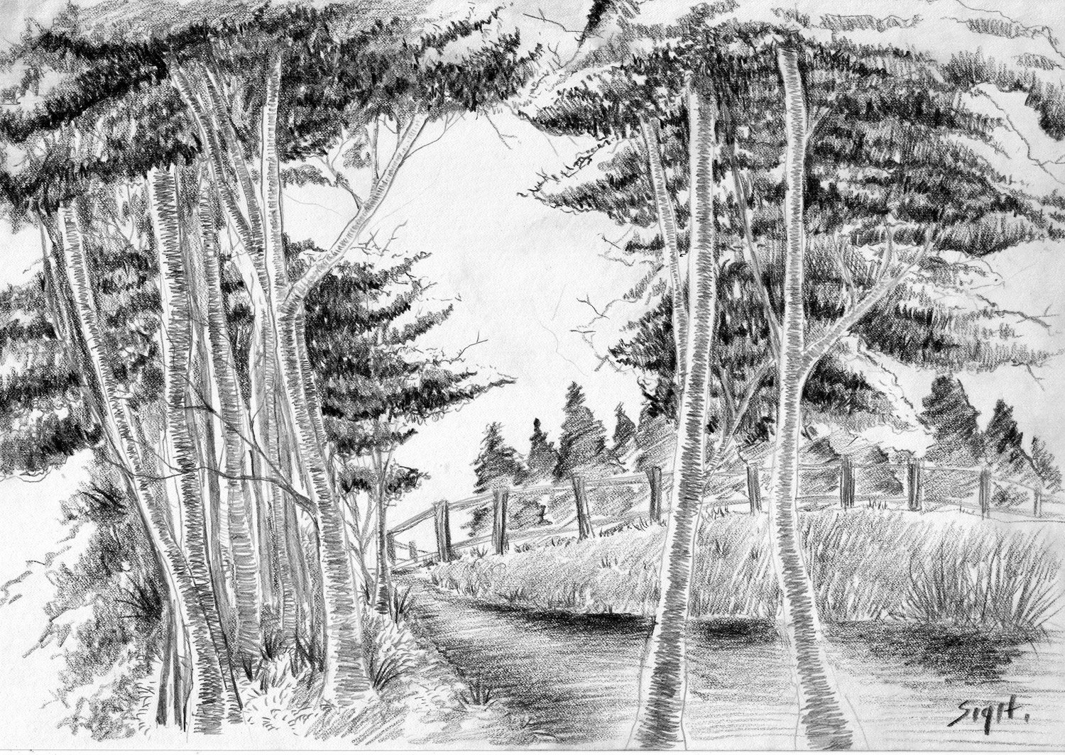 Tree Sketch With Pencil 2B